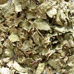 Tisane Menthe poivrée Bio (Mentha piperita) 25g